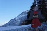 Лес Швейцарии
